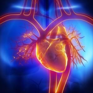 Cardiac Nurse